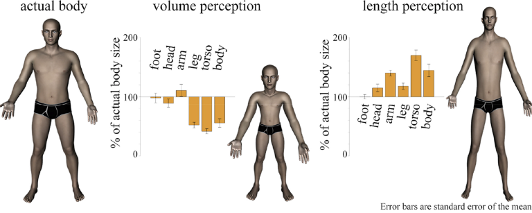 First study of its kind finds healthy people have a distorted sense of their body volume and length